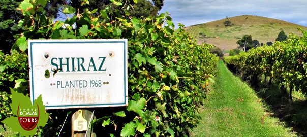 Best Winery Tour In Melbourne
